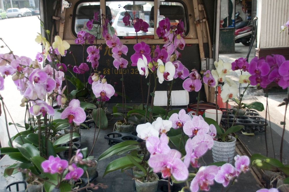 Orchids for Sale