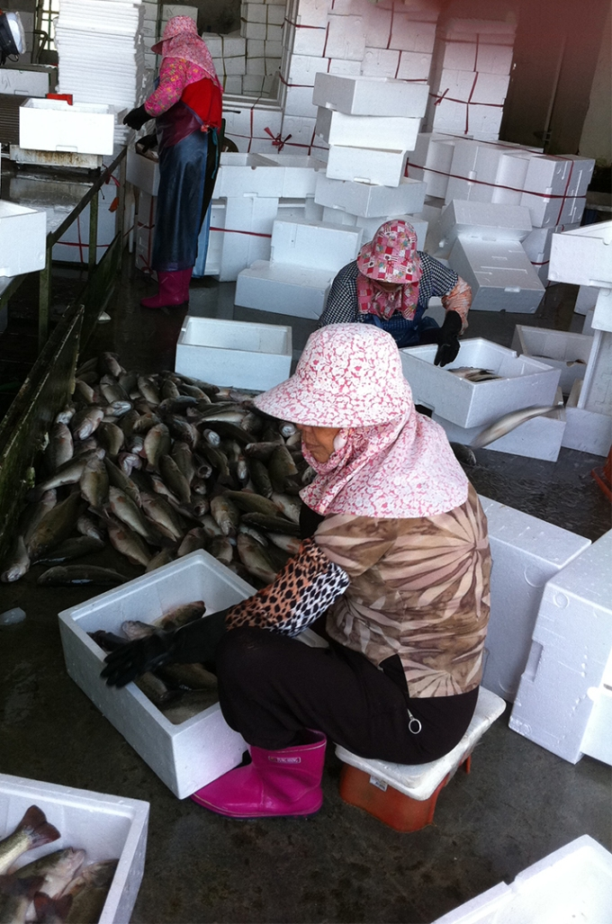 Packing Fish