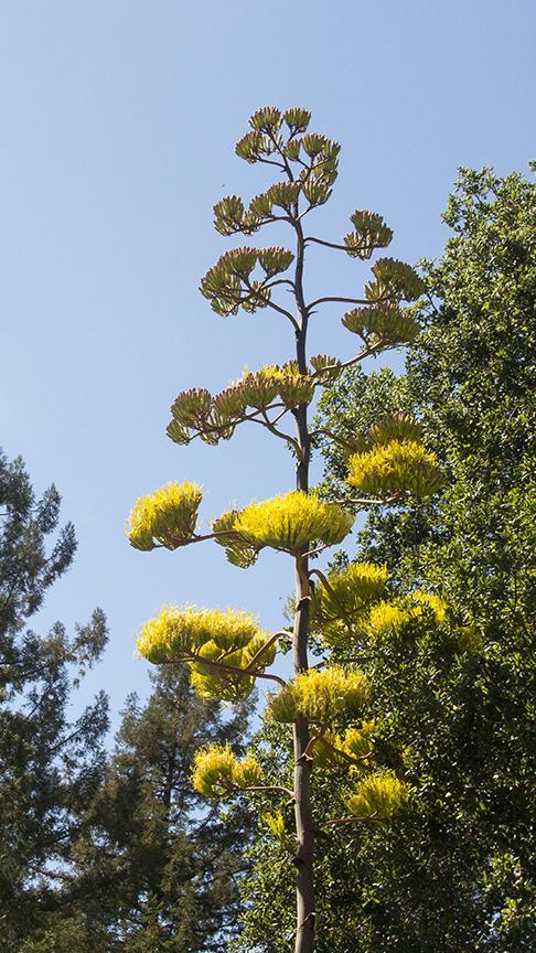 Elusive Yellow Plant