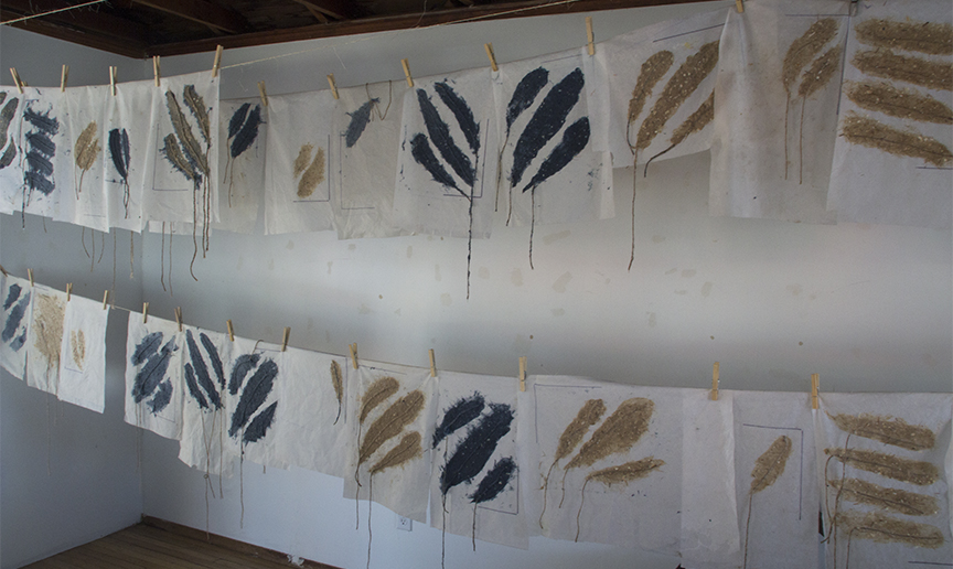 Feathers Drying