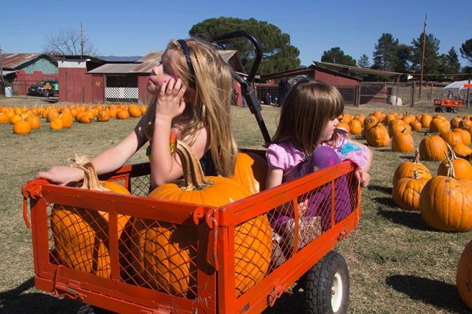 Pumpkin Picking Time