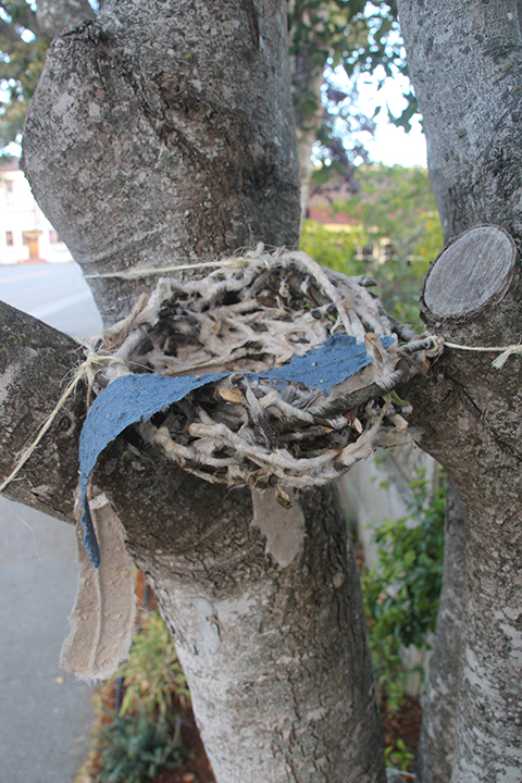 Small Nest in a Tree
