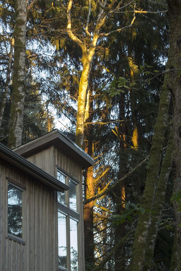 Sunset Light on a Large Tree