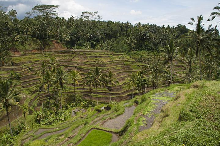 Bali Terraced Landscape