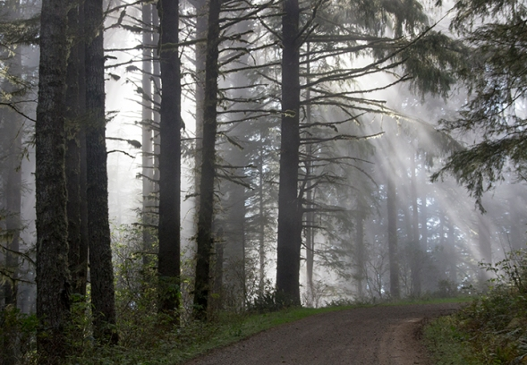 Fog and Sun in the Trees