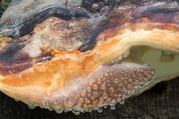 U.S.A. - Fungus on a Log