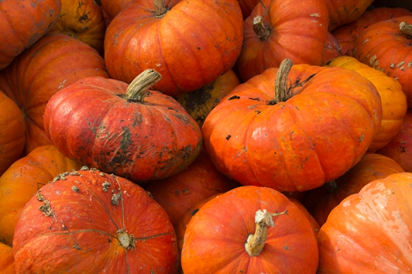 orange pumpkins