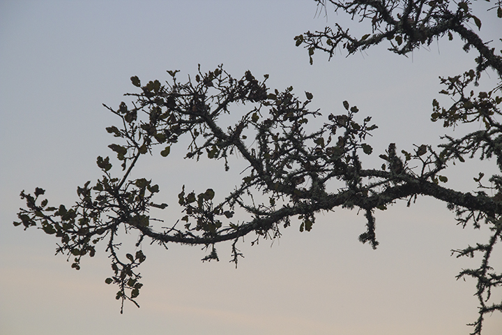 bare branch