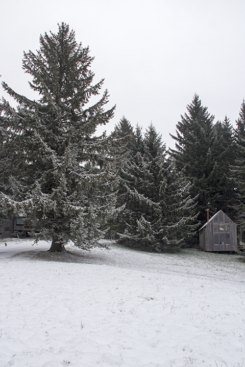 Sitka-Snow