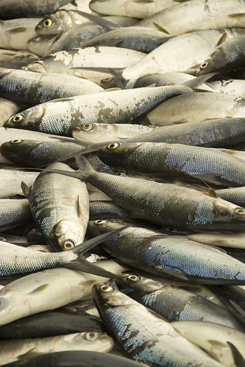 Taiwan fish market