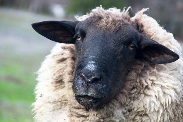 Attitude Ram