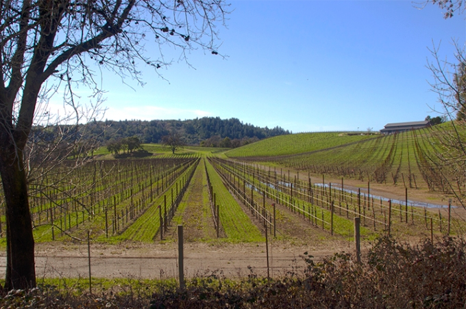 Wine Country View