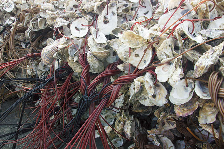 oyster shells color