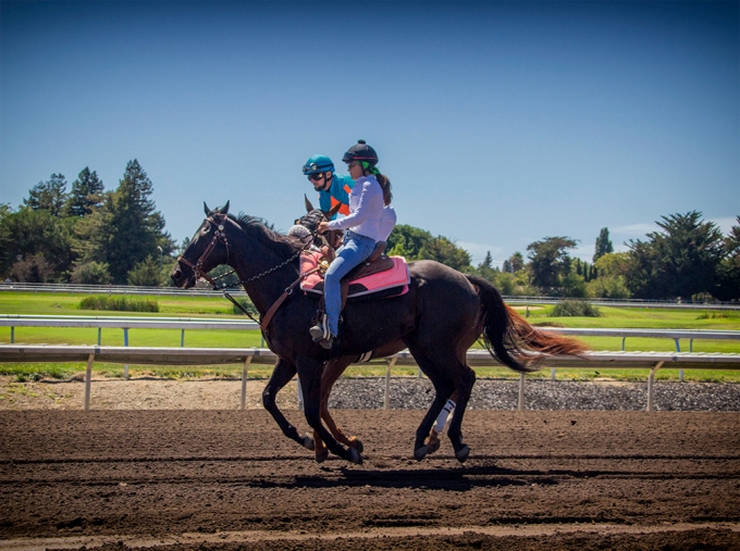 Horse Racing, Sonoma County Fair, Santa Rosa, California, 2014