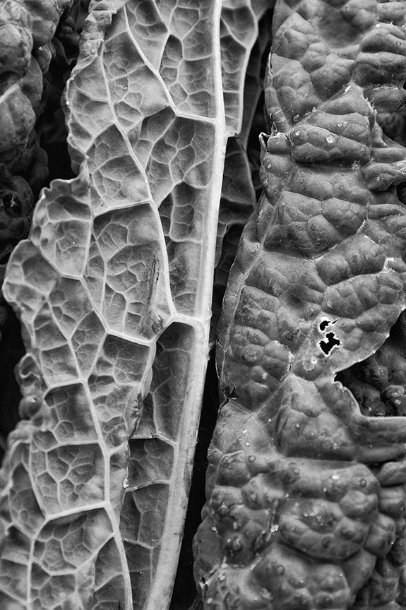 As Shown in Leanne Cole's Monochrome Madness, Week 27, http://leannecolephotography.com/2014/09/03/mm27-monochrome-madness-week-27/