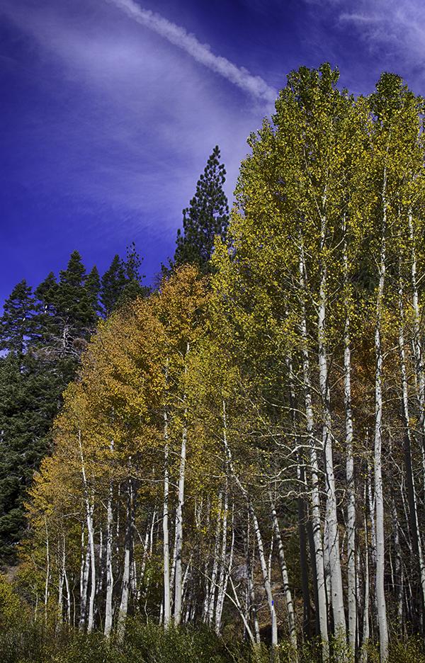 Sierra Nevada Mountain Road, California Fall, 2014