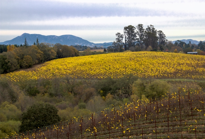 Iron Horse Vineyard, 9786 Ross  Station Rd, Sebastopol, CA