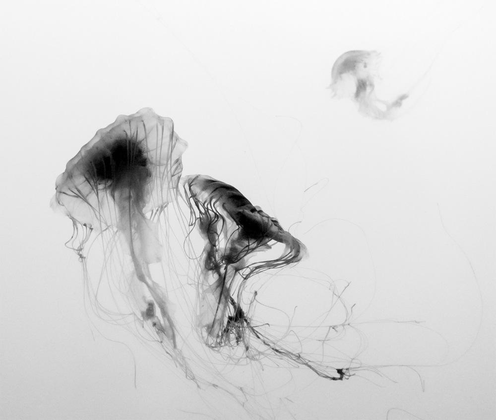 Jellyfish at the New England Aquarium, Boston, MA, U.S.A., Summer 2014