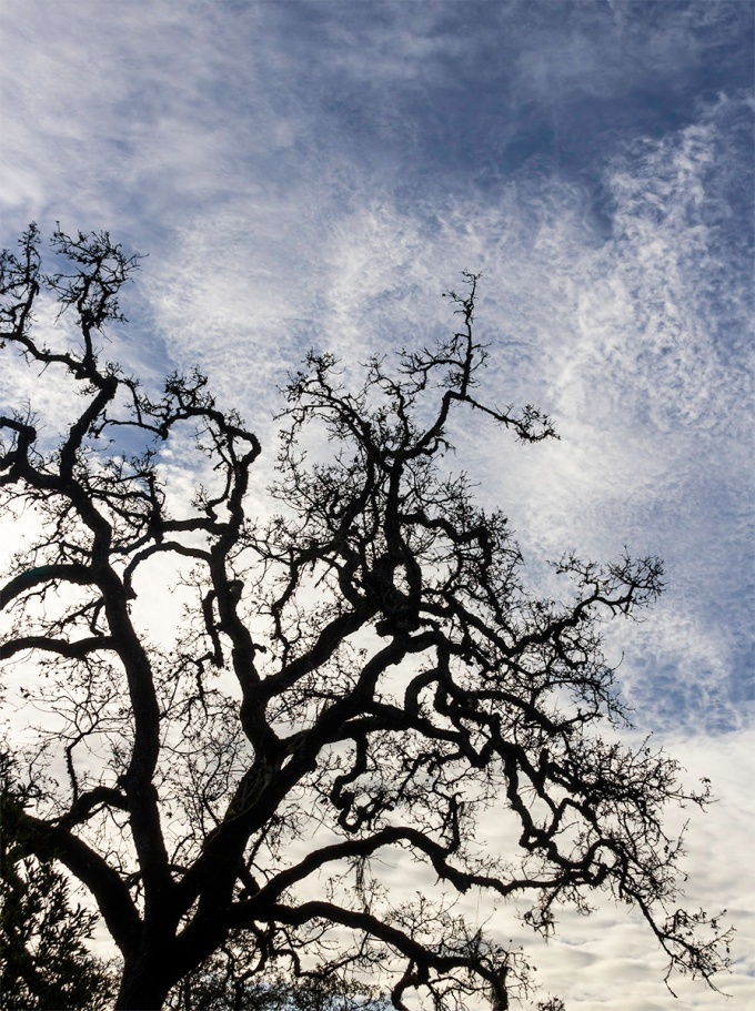 Working on compositional components, lines and shapes. I find trees to be a very difficult subject. This live oak seems to be appropriate for both lines and shapes. I also tried this image in b&w but the clouds become the subject and conflicted with the tree.