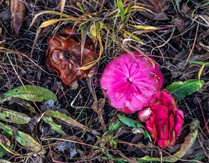 dead-flowers-square-s