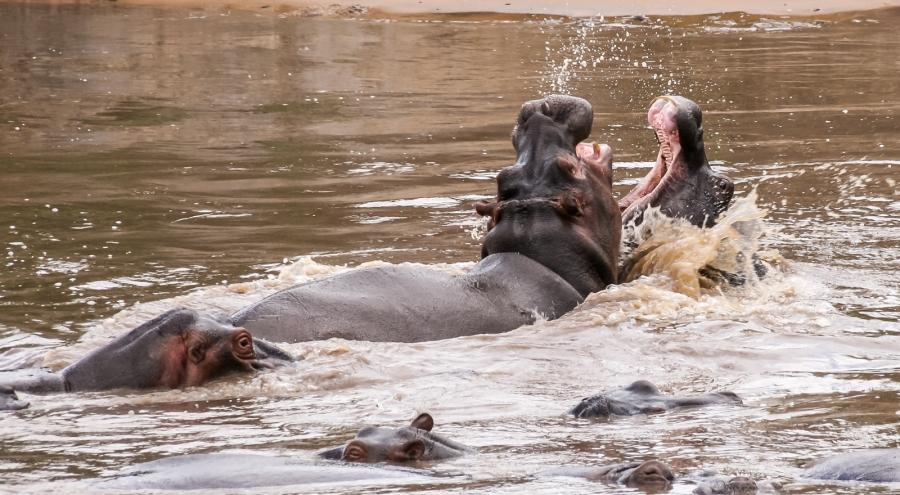 Serengeti, Tanzania, February 2008
