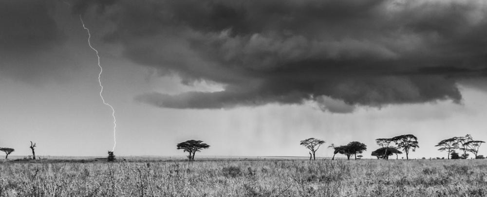 Serengeti Plain, Tanzania, February 2008