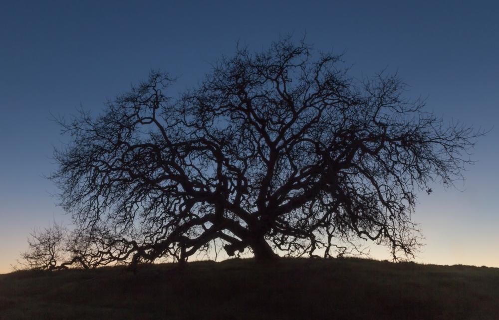 Crane Region Park, Santa Rosa, CA, March 5, 2015