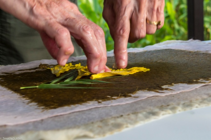 Jane Ingram Allen putting flowers onto her handmade paper. At the WuTong Foundation Residency in Zhu bei, Taiwan, March 18, 2015. http://janeingramallen.wordpress.com
