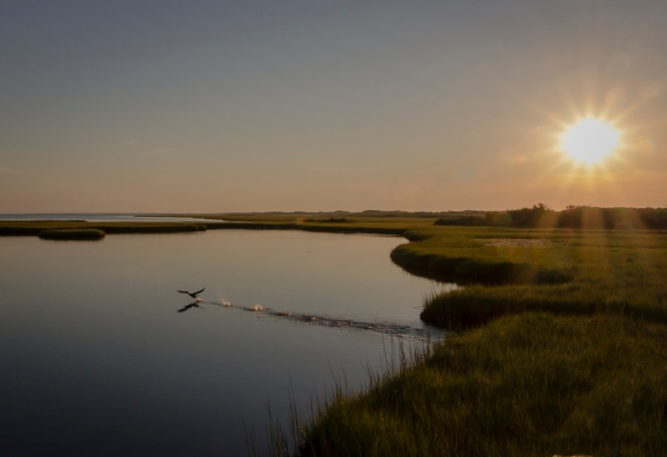 Salt Marsh, Watch Hill Visitors Center, Fire Island National Seashore, Fire Island, NY, U.S.A. September 18, 2015