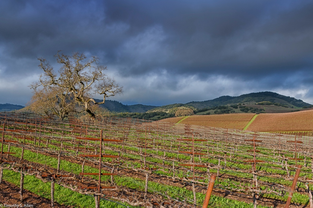 Kendu Family Winery, Kenwood, Sonoma County, California, U.S.A. January 23, 2015