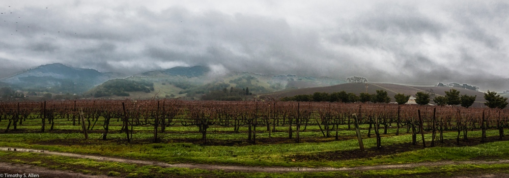 """Vineyards, Sonoma County Highway 12 - """"Valley of the Moon"""" Kenwood, California, U.S.A. January 9, 2015"""