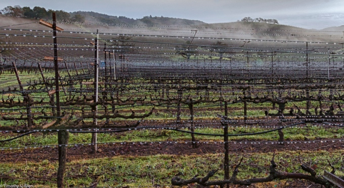 Water on the Wires of the Kunde Family Winery Vineyard, Hwy 12, Sonoma County, Kenwood, California, January 14, 2016
