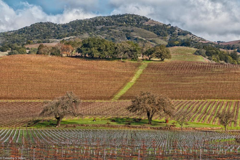 Kunde Family Winery, Kenwood, California, U.S.A. January 10, 2015