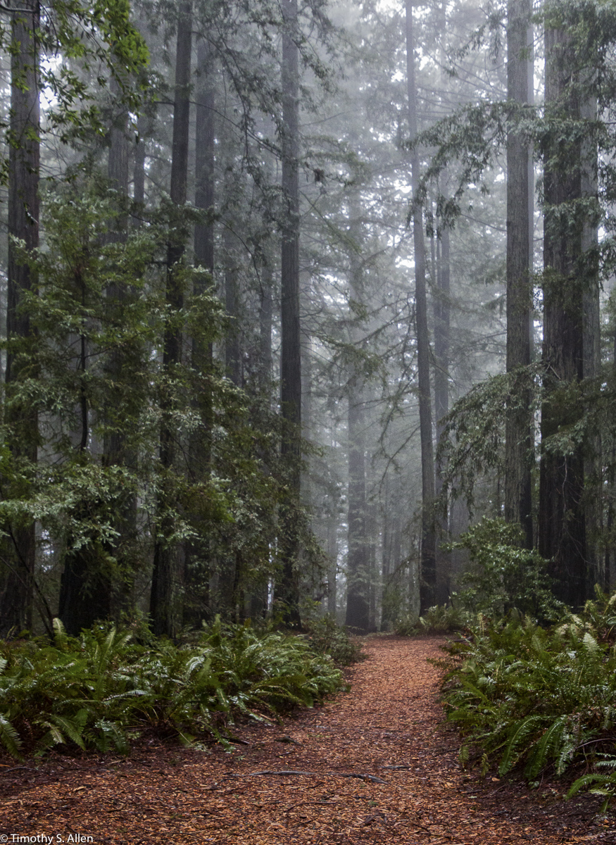 Land paths Grove of Old Trees, Occidental, Sonoma County, California, U.S.A. January 22, 2016