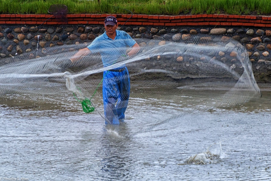 Aqua-farmer Netting the Remaining Fish in His Pond After Harvesting Most By Placing a Net at the Drain Opening as the Water is Lowered. He Will Clean His Pond and Restock It with Fish, Clams, Shrimp or a Combination of All Three. - Cheng-Long Village, Kohou Township, Yunlin County, Taiwan - April 24, 2016
