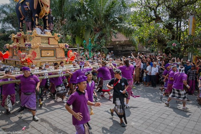 Cremation of the Ubud Bali Royal Family Member Cokorda Putra Widura. The bull is carried by palace personnel who are dressed in purple T-shirts to the cemetery where the cremation takes place. There are teams of palace personnel who trade off carrying the bull and the tower. Ubud, Bali - May 7, 2016