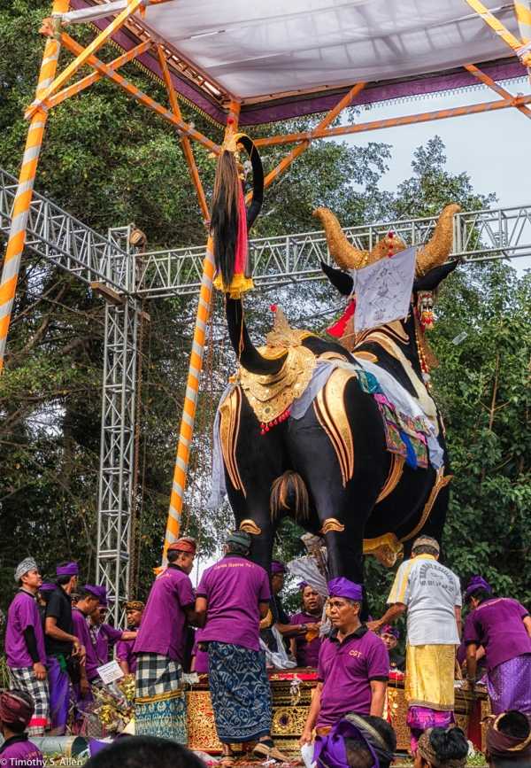 Cremation of the Ubud Bali Royal Family Member Cokorda Putra Widura. The sarcophagus bull with the body enclosed is being prepared for the burning. Ubud, Bali - May 7, 2016