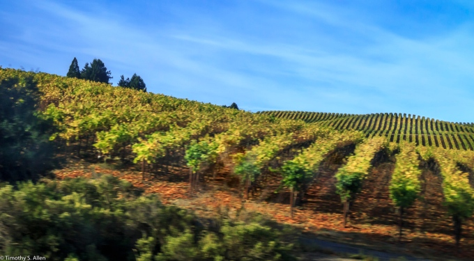 Taken from a Moving Bus Highway 101 Sonoma County, CA, U.S.A. October 7, 2016