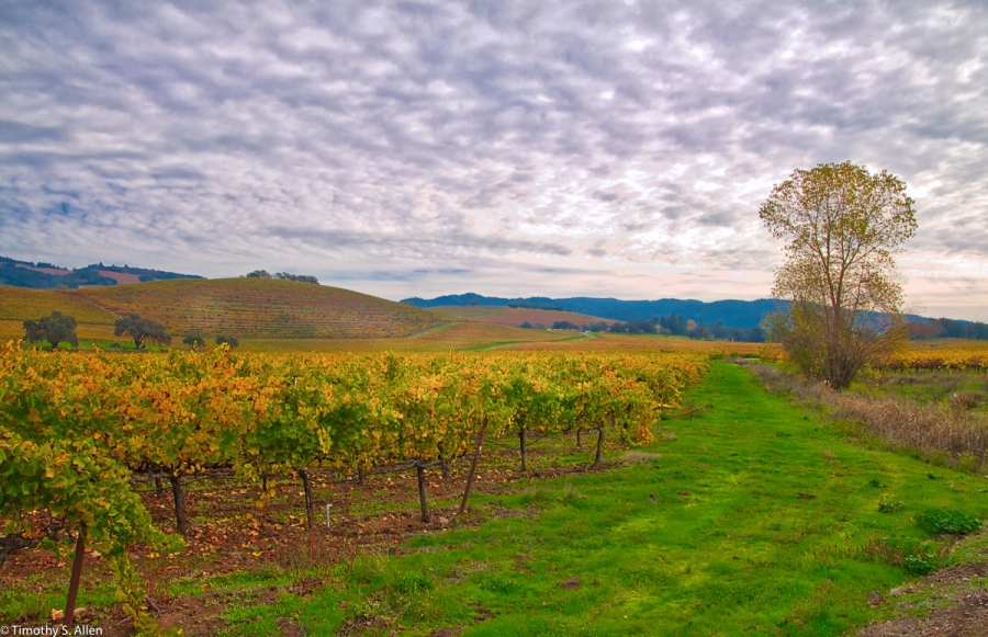 Kunde Winery, Highway 12, Sonoma County, CA, U.S.A. November 11, 2016