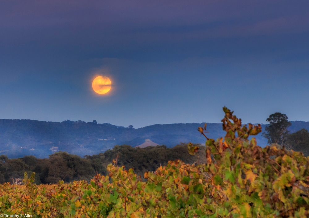 From a Vineyard in Sonoma County, U.S.A Nov. 13, 2016
