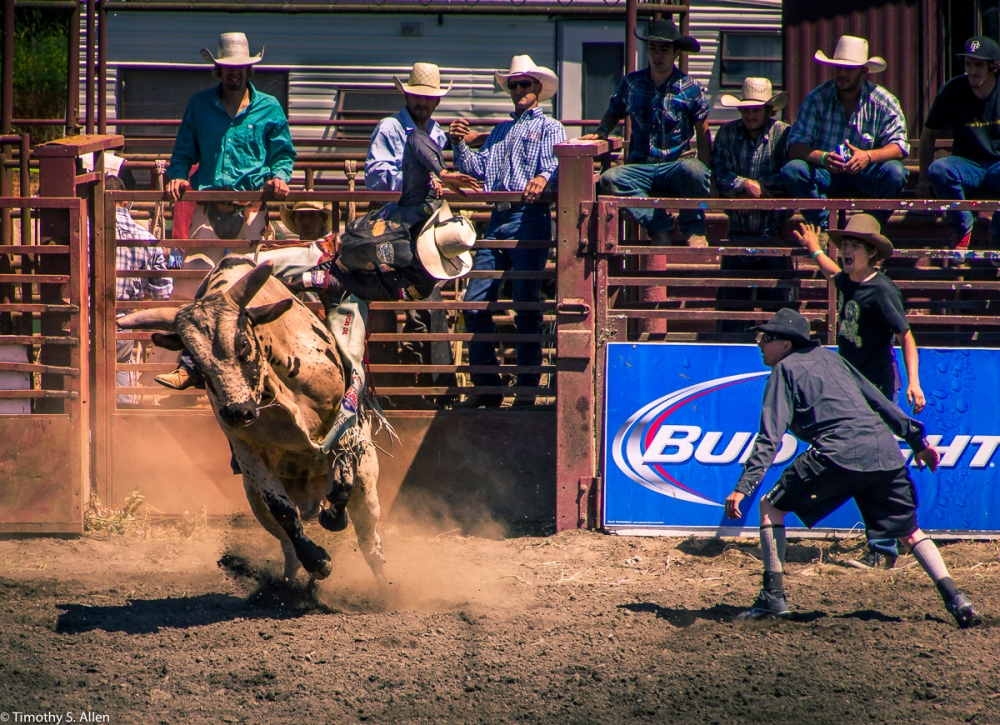 Bull Riding Duncan Mills Rodeo June 24, 2015