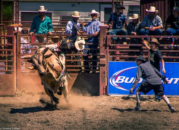 Bull Riding Duncan Mills Rodeo June 24, 2015