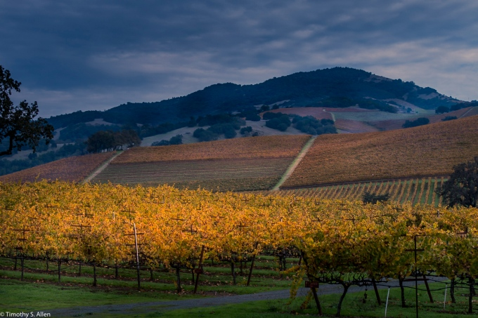 Kunde Family Winery Vineyard Sonoma Highway, Kenwood November 11, 2016