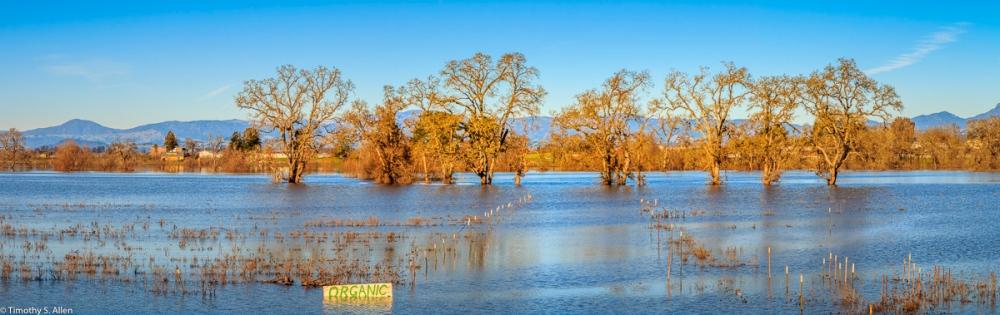 Santa Rosa Creek Slowly Returning to Its Banks After Heavy Rains. Santa Rosa, CA, U.S.A. January 13, 2017