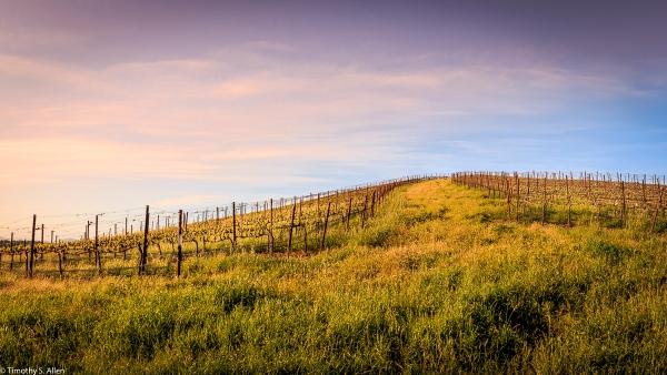 Vineyard Near Crane Creek Regional Park Sonoma County, CA, U.S.A. April 1, 2017