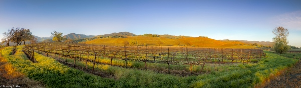 anoramic of Sonoma Valley Vineyards Hwy 12, Kenwood, CA, U.S.A. April 1, 2017