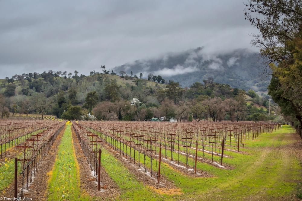 Sonoma County Vineyard - California, U.S.A. January 15, 2015