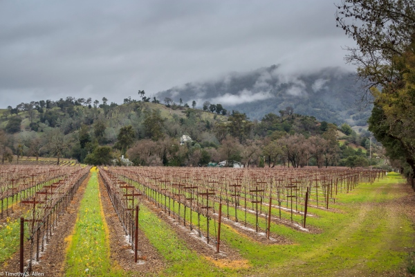 Sonoma County Vineyard - California, U.S.A. January 15, 2015