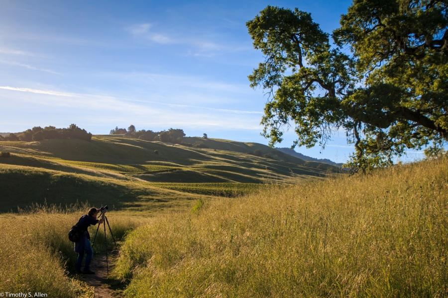 My Friend Rawls Capturing a California Live Oak Tree Early in the Morning - Crane Creek Regional Park, Santa Rosa, CA, U.S.A. May 3, 2017