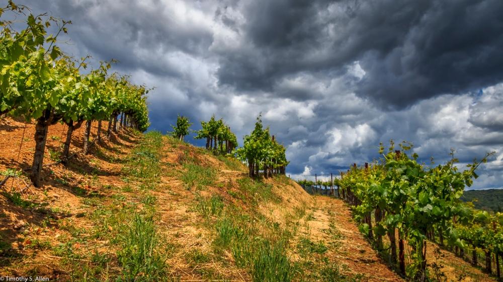 Dry Creek Area Vineyard Healdsburg, CA, U.S.A. May 14, 2017